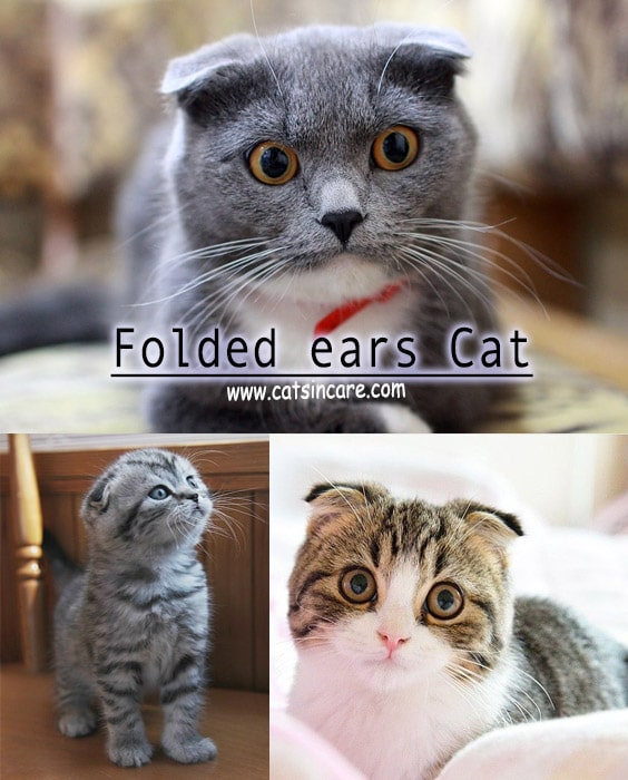 Different Type of Cats What KIND OF CATS Are You?