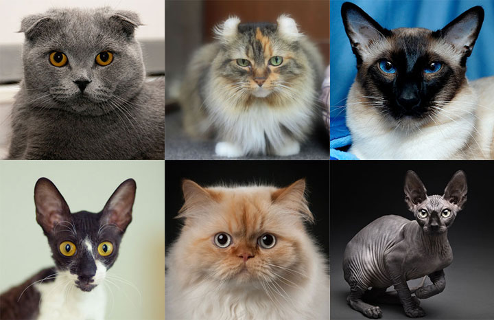 Different Type of Cats | What KIND OF CATS Are You?