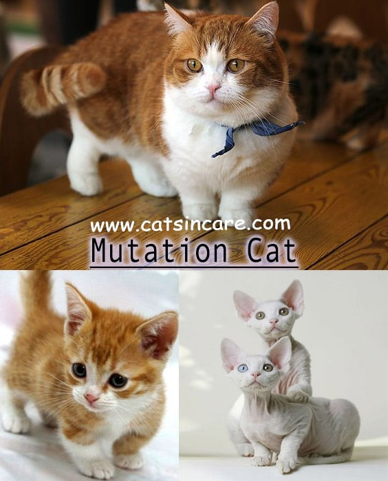 Different Type of Cats What KIND OF CATS Are You? - Cats ...