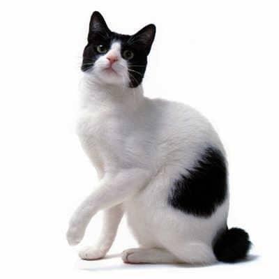 unusual cat breed