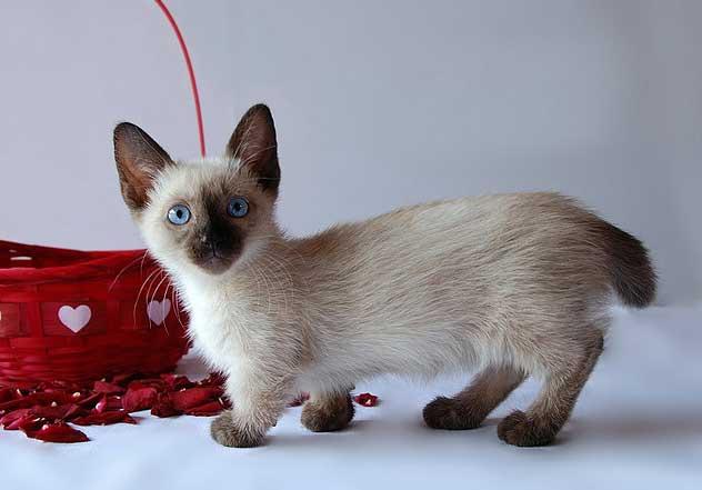 unusual-cat-breeds