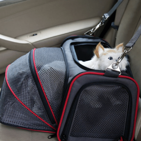 How to Travel with Cat in Car?