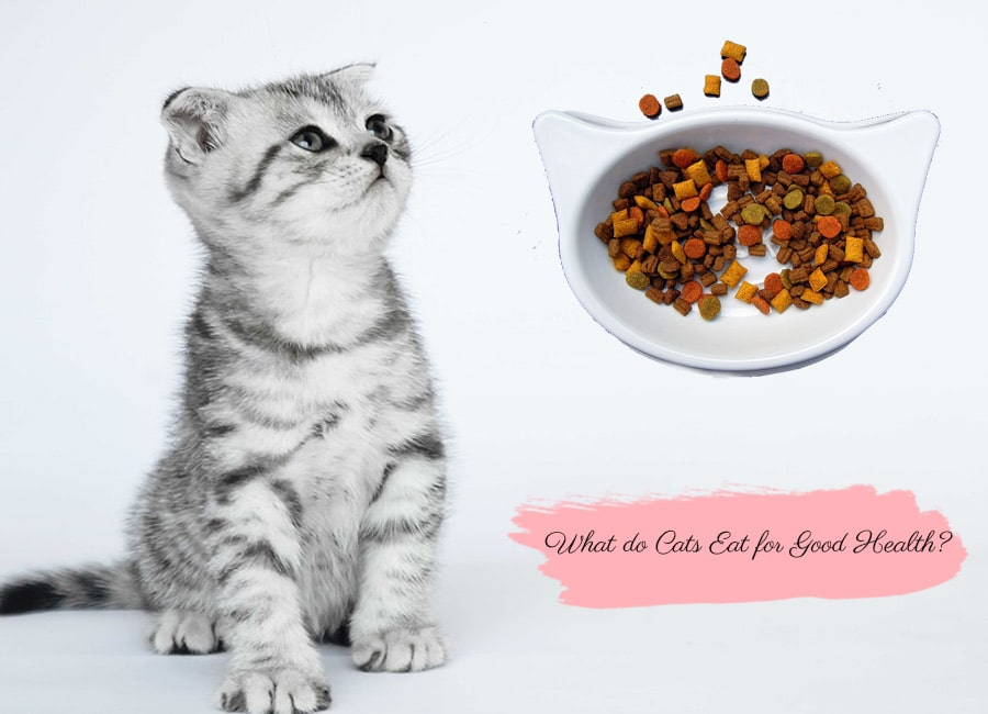 What do Cats Eat for Good Health?