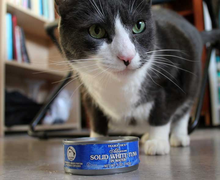 Can You Feed Canned Tuna To Cats