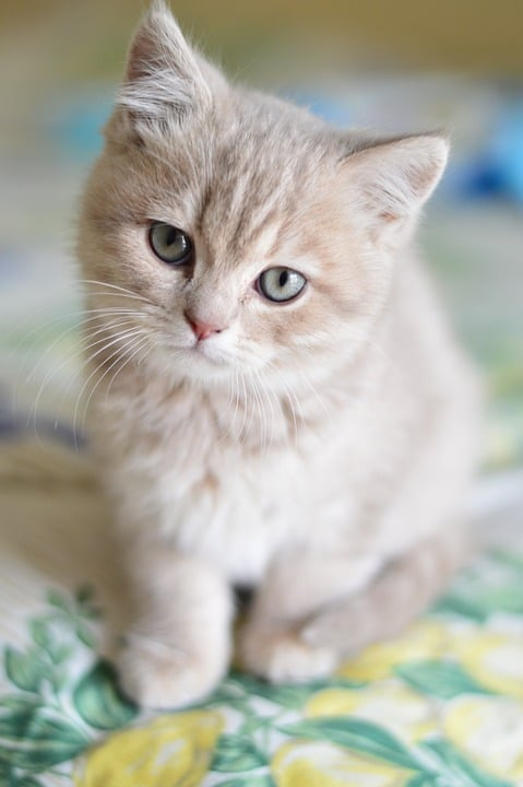 Cat Information and Facts