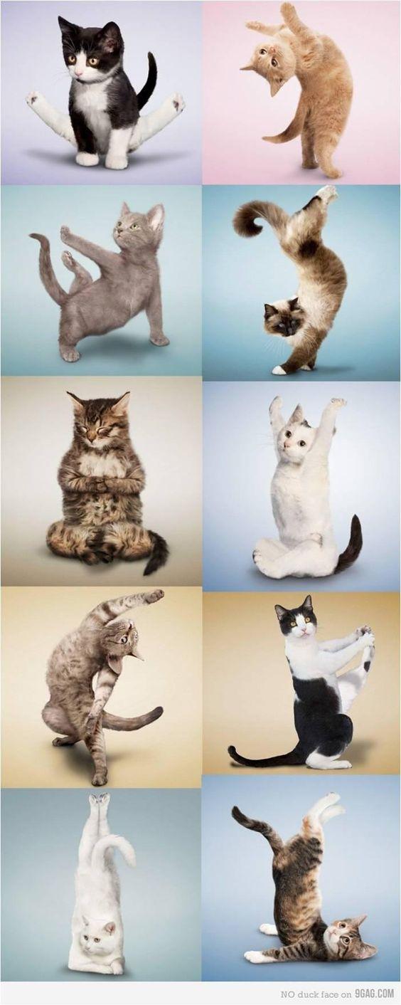 cat mythology