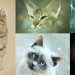 different cat breed