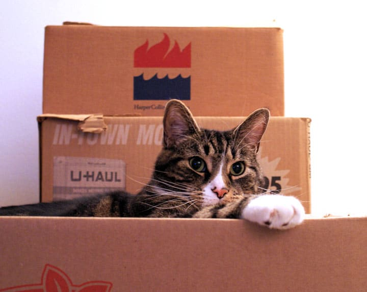 moving across country with cats