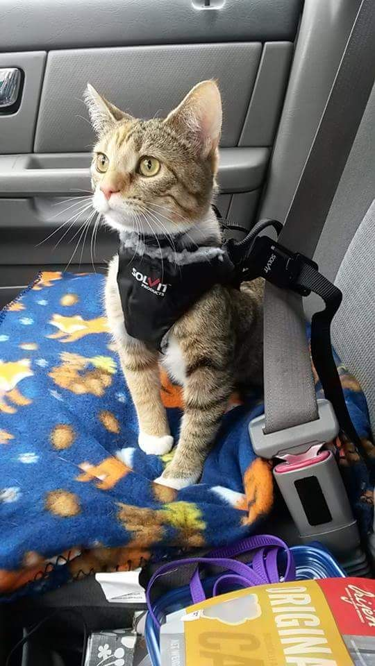 How To Travel With Cat In Car Cats In Care
