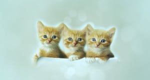 tiny-cat-breeds
