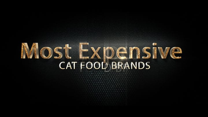 Cat-Food-Brands1