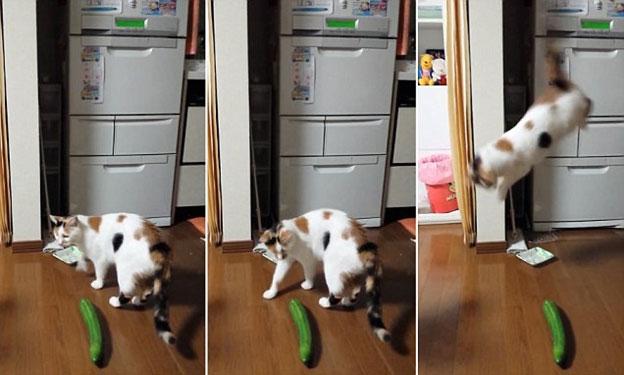cats afraid