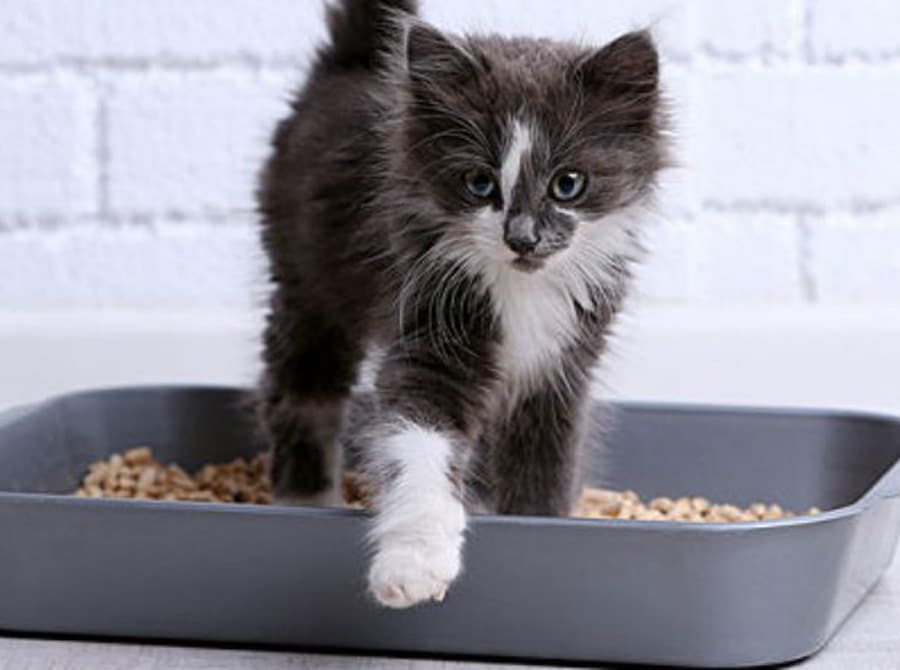 How To Get Rid Of Cat Odor In Litter Box