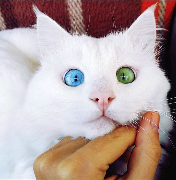crossed-eyed-cats