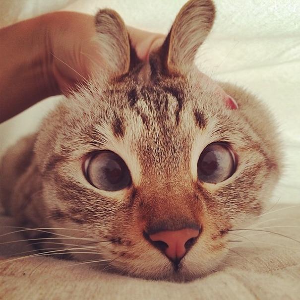 googly-eyes-cats