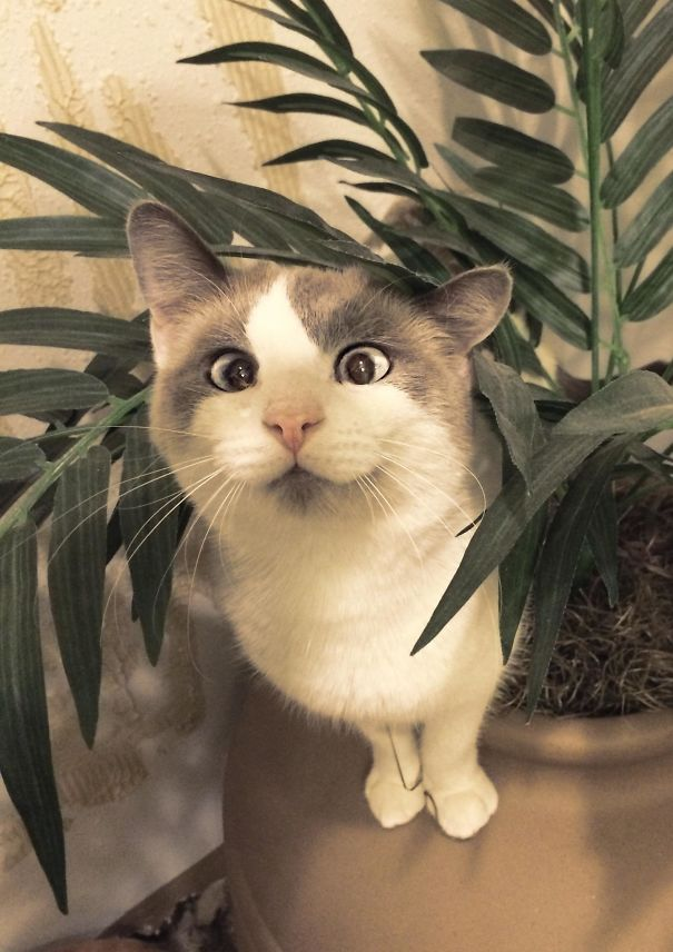 crossed-eyed-cats-