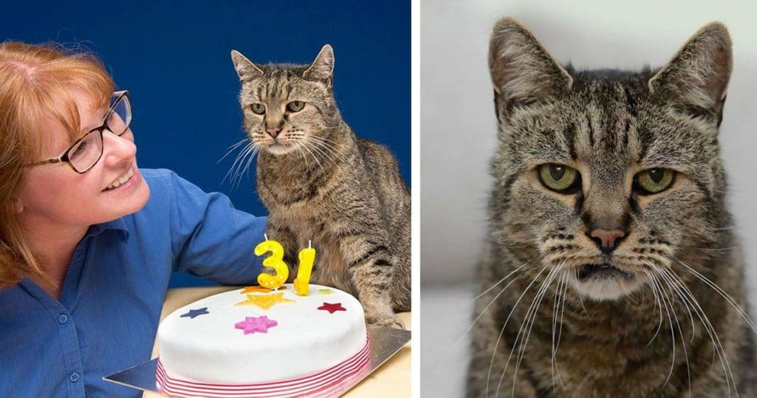 Nutmeg The Cat 31 Years Old Cat The World Oldest Living Cat