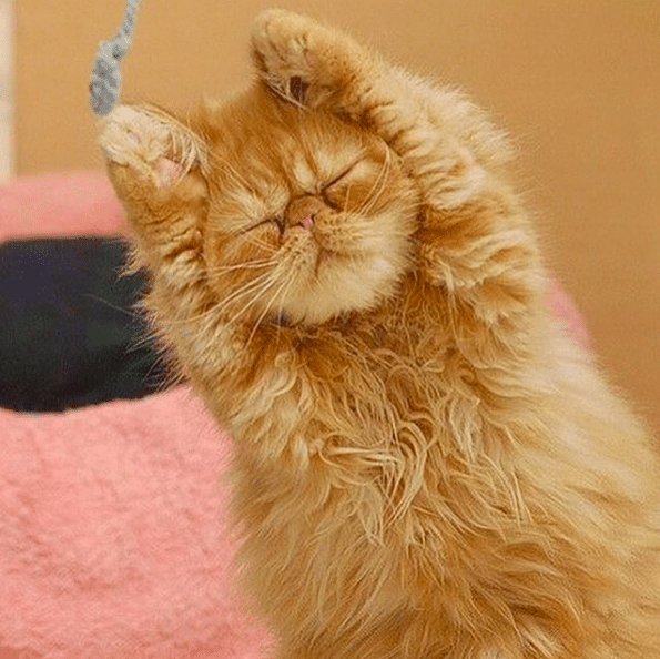 20 Weird Facts About Cats You Probably Didn't Know