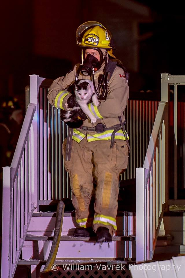 Hero Cat Alert To Owner Saving Family From Burning Home