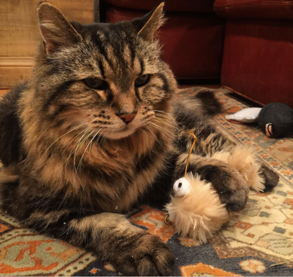 Corduroy, The Oldest Living Domestic Cat In The World's