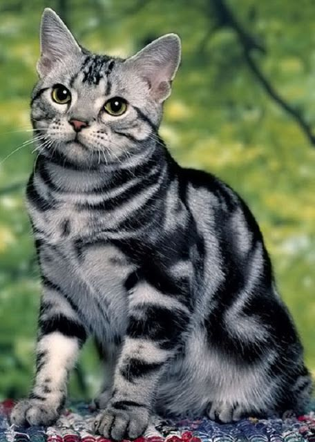 tabby cat behaviour understanding
