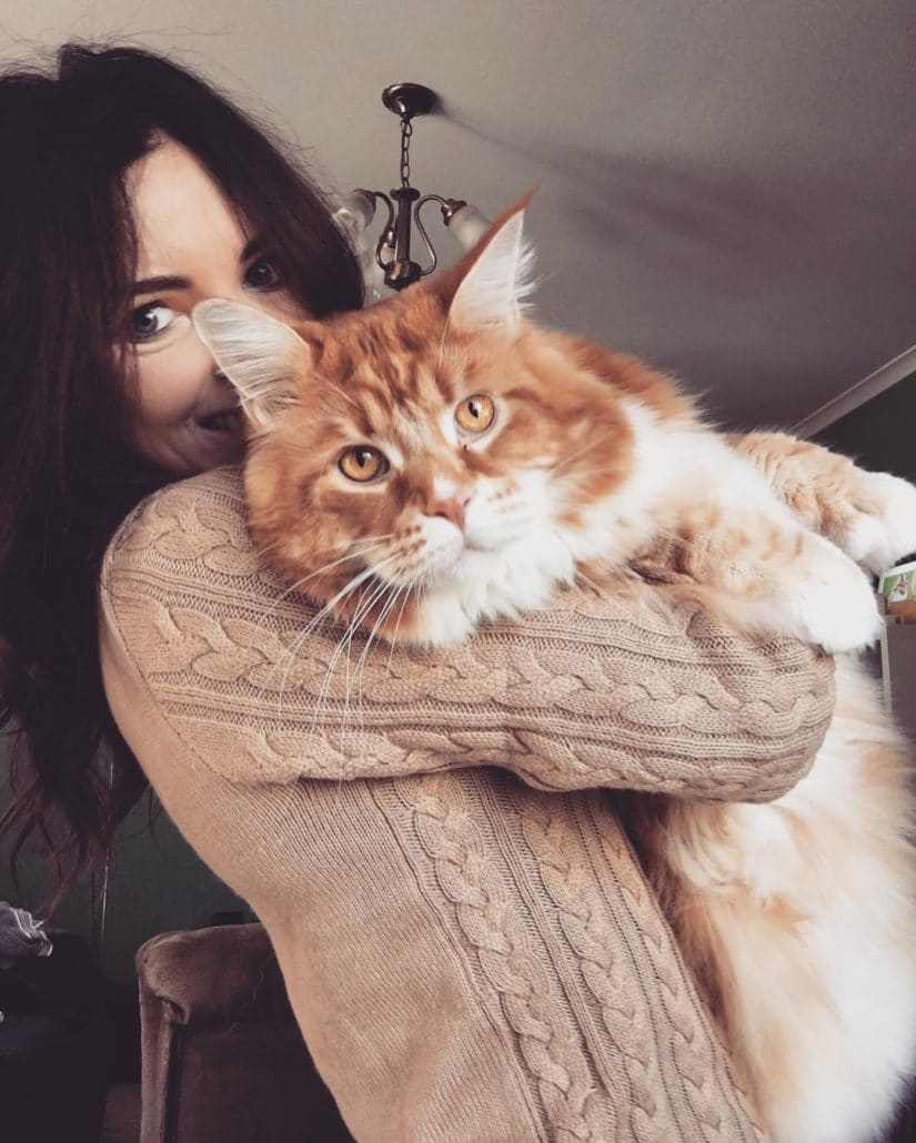Omar maincoon3 825x1030 Meet the Instagram Sensation Omar, The World Longest Cat