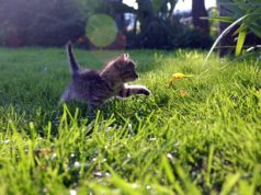 cat grass field 238x178 Cats In Care Homepage   Random