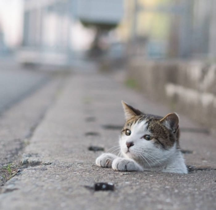 Funny Pic : A Japanese Cat life and A Drainage