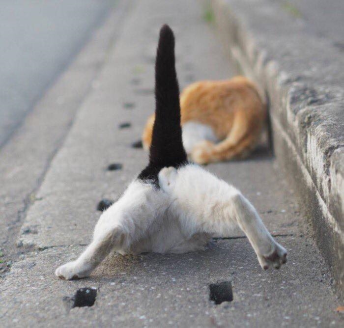Cat and Pipe5 Funny Pic : A Japanese Cat life and A Drainage