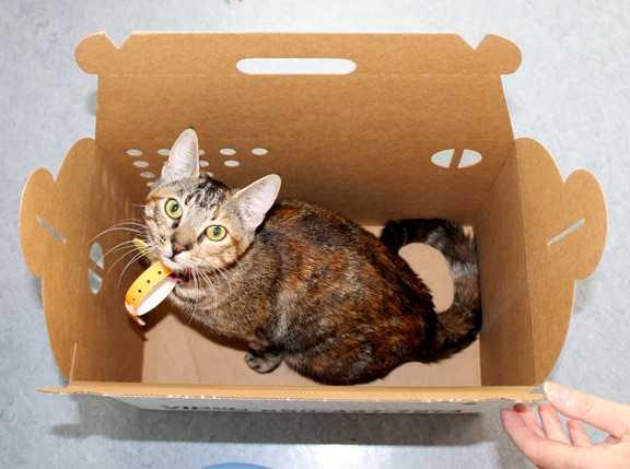 Cardboard carrier 2 Choosing the right cat carrier for your feline friend
