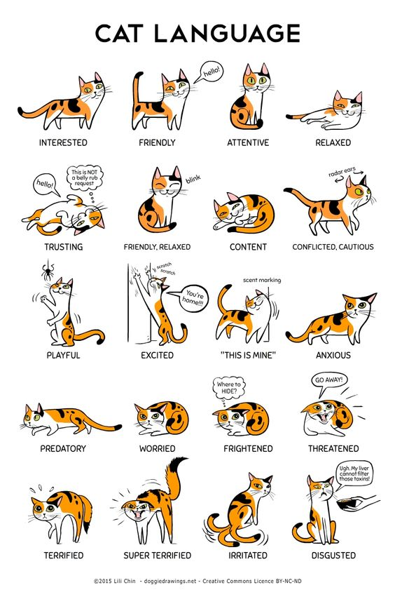 What does the Cat body Language convey?