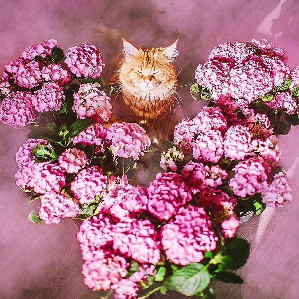 Most Wonderful Cat Image In Mythical Scene