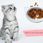 What-do-cat-eat-for-good-health