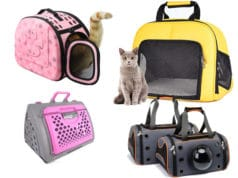 cat carrier 3 238x178 Cats In Care Homepage   Random