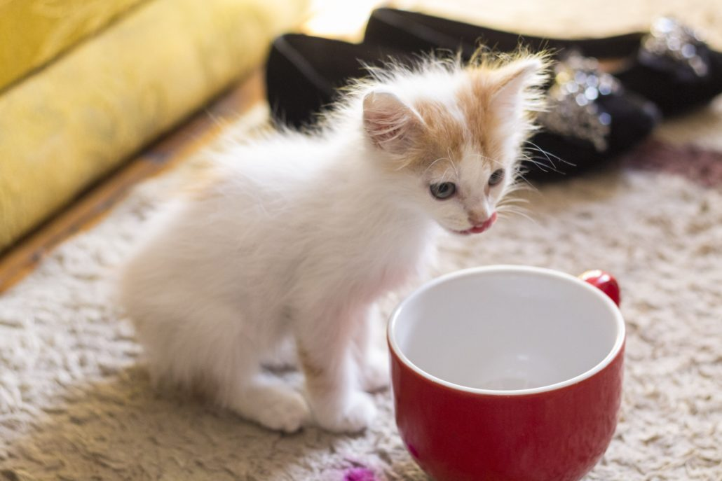 Thiamine Rich Foods Cats