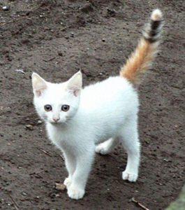 cheshire cat toy shop hillsborough