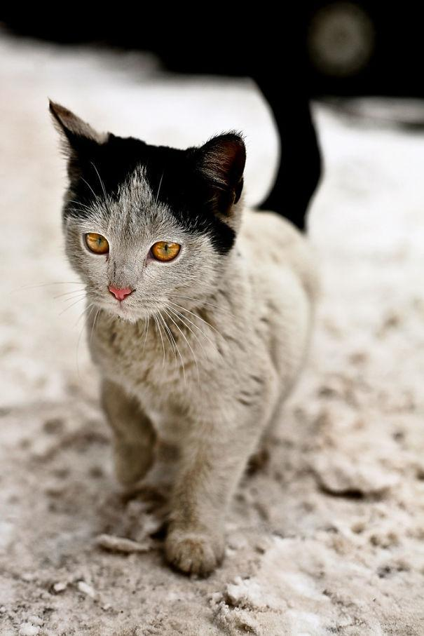 20 cat markings (cool cats with fur markings)