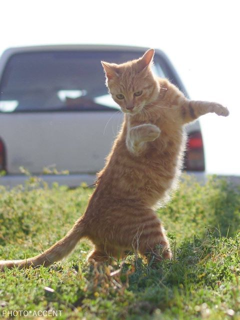Adorable Photos Of Standing Cat