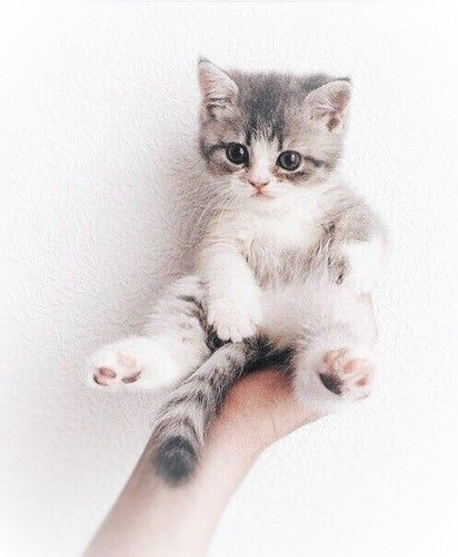 Black and White Cat Names that is ideal for your Black and white Kittens