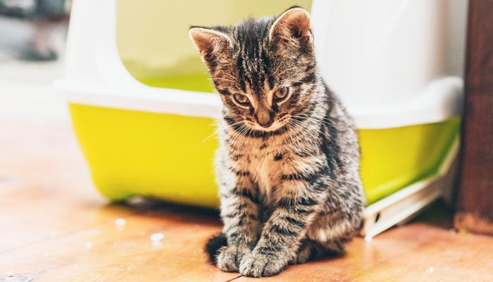 Cat Behavior Problems and how to tackle it effectively