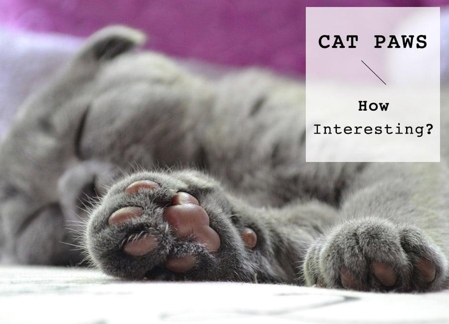 bissell cat urine eliminator review