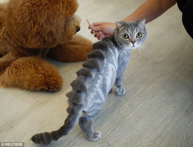 Cat Haircut