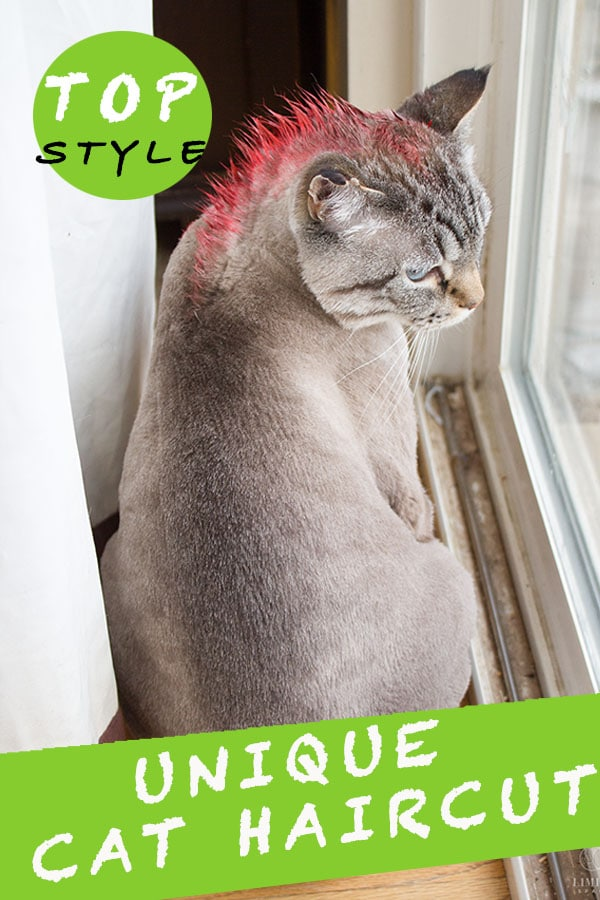Top  Strange And Unique Cat Haircuts