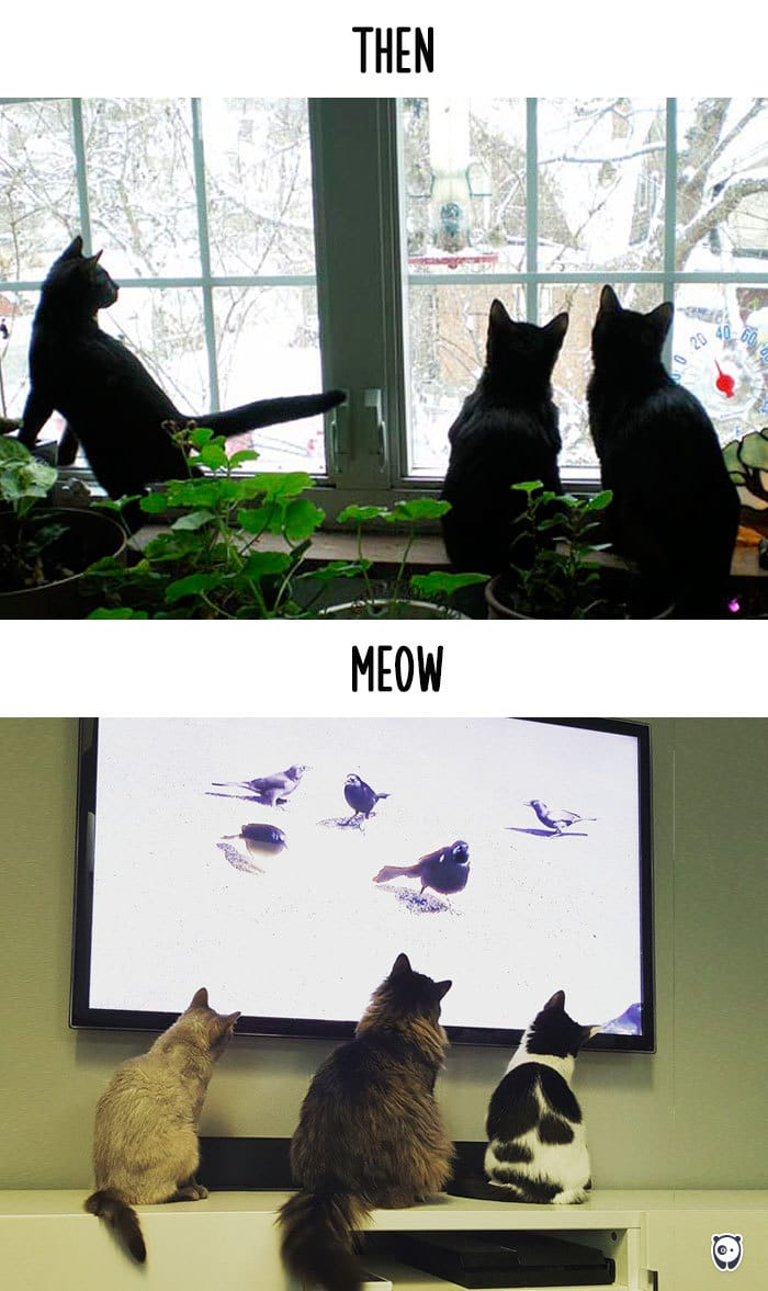 Then v/s Meow: How Technology Has Changed Cat's lives