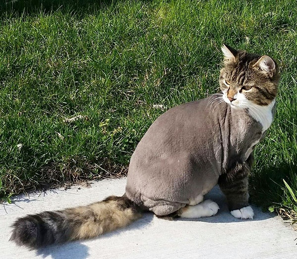 Top Strange And Unique Cat Haircuts Cats In Care