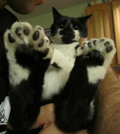 Image result for happy sunday tuxedo cat