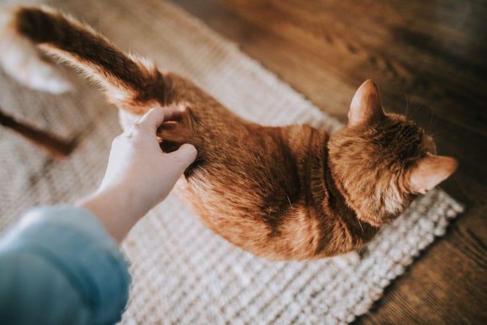 cat love human
