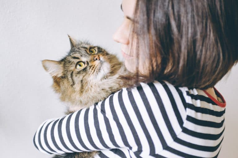 do cats love their owners