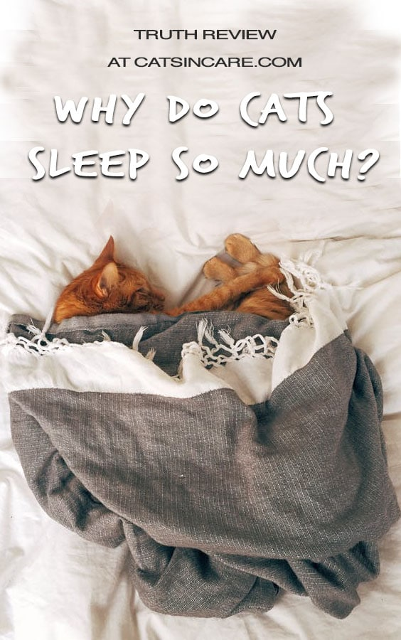 Truth Review Why Do Cats Sleep So Much?
