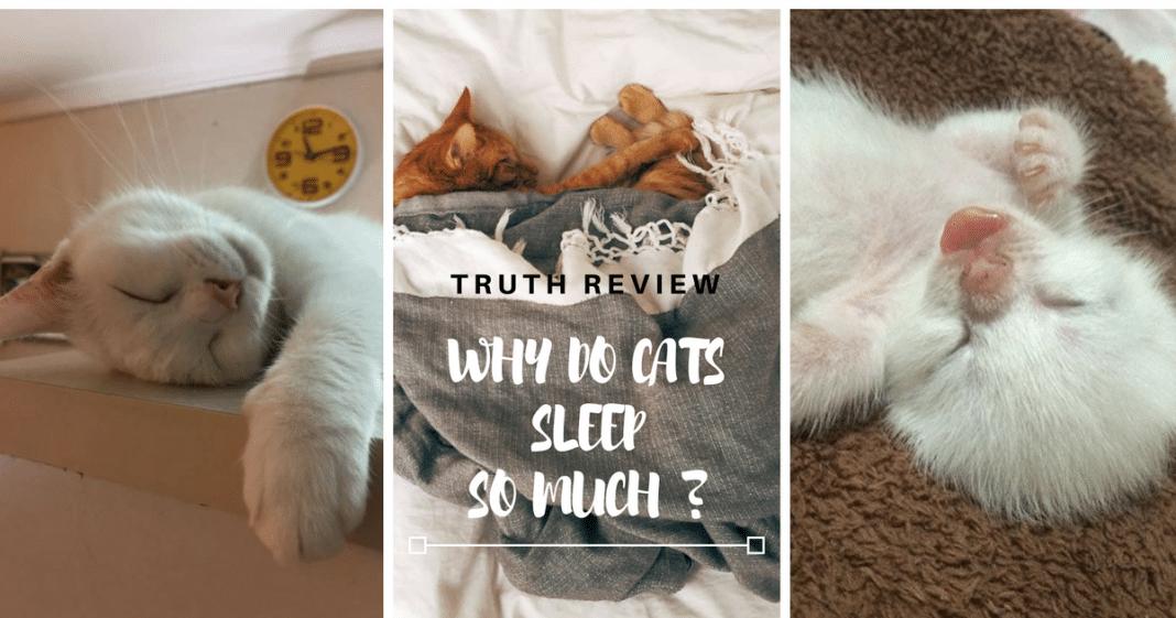 mri versus cat scan